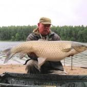 Белый амур весом 14.5 кг, пойманный в Белоруси