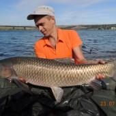 Белый амур весом 11.65 кг, пойманный на бойл КРЕВЕТКА•СПЕЦИИ