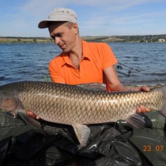 Белый амур весом 11.65 кг, пойманный на бойл КРЕВЕТКА•СПЕЦИИ>