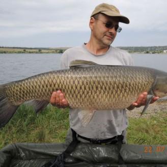 Белый амур весом 12.75 кг, пойманный на бойл КРЕВЕТКА•СПЕЦИИ>